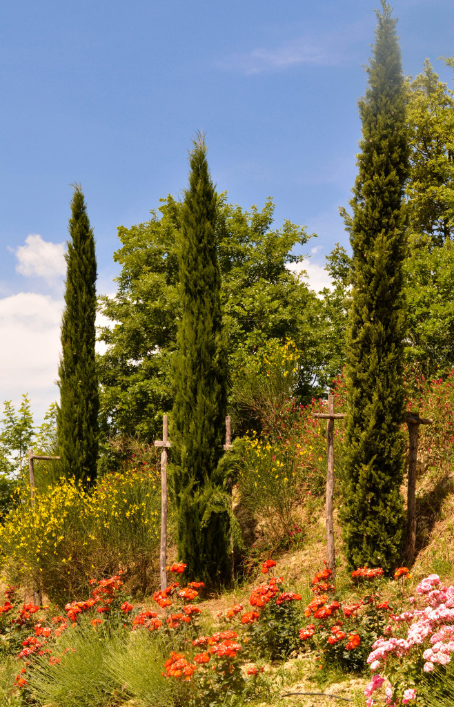 A Tuscan lunch at a Chianti vineyard, The Best of Tuscany Tour, Walkabout Florence, Siena,
